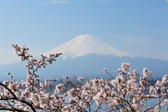 Mt Fuji and Cherry Blossom Royalty Free Stock Photo