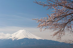 Mt Fuji and Cherry Blossom Stock Images