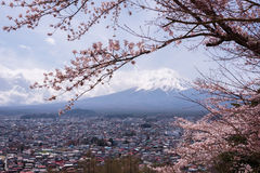 Mt.fuji with cherry blossom and yellow grass in a cloudy day. A landscape in Japan with its remarkable mountain. Stock Images