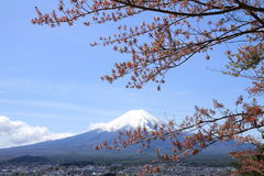 Mt. Fuji and cherry blossoms Royalty Free Stock Photos