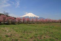Mt. Fuji and cherry blossoms Stock Photo