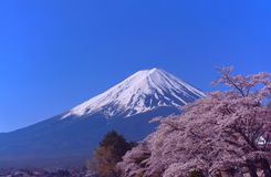 Mt. Fuji and Cherry blossoms in Japan stock photo