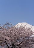 Mt Fuji and cherry blossoms Stock Photo