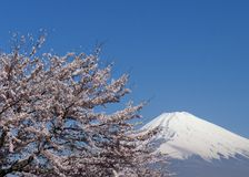 Mt Fuji and cherry blossoms Stock Photography