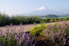 Mt Fuji com o jardim na parte dianteira Foto de Stock