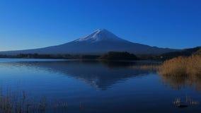 Mt Fuji con el cielo azul del parque de Oishi en el lago Kawaguchi Japón almacen de metraje de vídeo