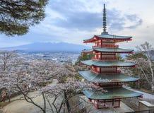 Mt.fuji con el primero plano de Sakura en la pagoda de Chureito Imagen de archivo libre de regalías