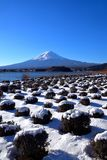 Mt Fuji con paisaje nevoso del parque de Oishi en el lago Kawaguchi Japón imagenes de archivo