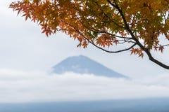 Mt Fuji dans la saison d'automne au Japon avec l'arbre d'érable part Images stock