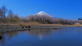 Mt Fuji des fleurs de cerisier du parc de Yakisaki de lac dans le lac Kawaguchi Japon clips vidéos