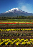 Mt fuji dg-24 royalty free stock images