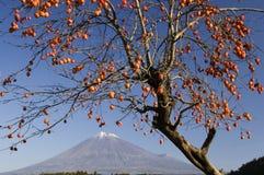 Mt fuji-dg 34. Delicious looking Japanese Kaki near Mount Fuji Royalty Free Stock Photography