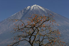 Mt fuji-dg 42 Stock Images