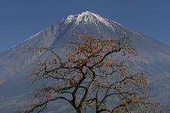 Mt fuji-dg 42. Delicious looking Japanese Kaki near Mount Fuji Stock Images