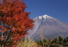 Mt fuji-dg 44. The Mt,Fuji in early autumn and colored leaver Stock Photo