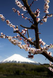 Mt fuji-dg 54 Stock Photos