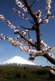 Mt fuji-dg 54. Mount Fuji with pink plum blossoms Stock Photos