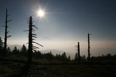 Mt fuji-dg 59. Majestic Mount Fuji rising through a sea of fog Royalty Free Stock Images