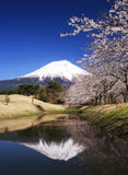 Mt fuji-dg 61. Beautiful cherry blossoms with snow-capped Mount Fuji Royalty Free Stock Images