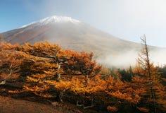 Mt fuji-dg 62. The golden trees with snow head Mt,Fuji Stock Images