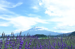 Mt Fuji e alfazema fotografia de stock royalty free