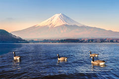 Mt Fuji in the early morning Royalty Free Stock Photo