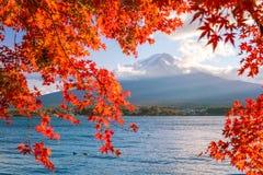 Mt Fuji en automne avec des feuilles d'érable rouge Images libres de droits
