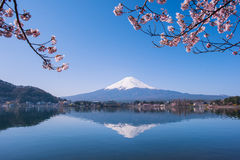 Mt.Fuji en Cherry Tree Stock Afbeeldingen