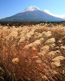 Mt. Fuji in Fall Stock Photos
