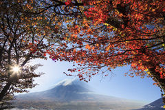 Mt. Fuji with fall colors in Japan Stock Photos