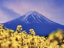 Mt. Fuji, famous japanese landmark with flowers stock photo