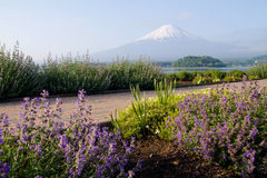 Mt.Fuji with flower garden at front Stock Photo