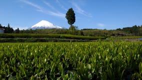 Mt. Fuji, Giappone fotografie stock libere da diritti