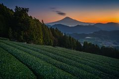 Mt. Fuji with green tea field at sunrise in Shizuoka royalty free stock images