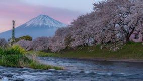 Mt Fuji i czereśniowych okwitnięć czasu upływ zbiory wideo