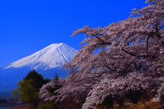 Mt Fuji i Czereśniowych okwitnięć niebieskie niebo Nagasaki Parkujemy Jeziornego Kawaguchi Japonia Fotografia Royalty Free