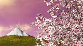 Mt Fuji i kwitnący Sakura czereśniowy drzewo przy świtem zbiory