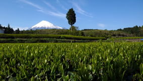 Mt. Fuji, Japan Royalty Free Stock Photos