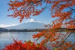 Mt. Fuji, Japan in Autumn Season. Mt. Fuji, Japan on Lake Kawaguchi with autumn foliage royalty free stock image