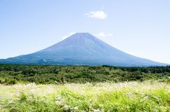 Mt. Fuji with Japanese Pampas Grass in Autumn, Japan Stock Photo