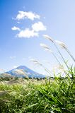 Mt. Fuji with Japanese Pampas Grass in Autumn, Japan Royalty Free Stock Images
