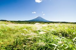 Mt. Fuji with Japanese Pampas Grass in Autumn, Japan Royalty Free Stock Photography