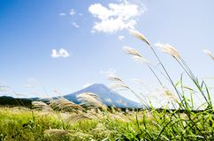 Mt. Fuji with Japanese Pampas Grass in Autumn, Japan Royalty Free Stock Photos