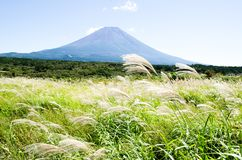 Mt. Fuji with Japanese Pampas Grass in Autumn, Japan Stock Photos