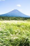 Mt. Fuji with Japanese Pampas Grass in Autumn Stock Photos