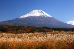 Mt. Fuji with Japanese silver grass. In autumn, Japan Royalty Free Stock Photo