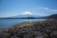 Mt.Fuji in kawaguchiko lake,Kawaguchiko lake of Japan,Mount Fuji stock image