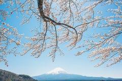 Spring Cherry blossoms, pink flowers,Cherry blossoms. Mt.Fuji in kawaguchiko lake,Kawaguchiko lake of Japan,Mount Fuji, Kawaguchi Lake, Japan,with,Spring Cherry stock photos