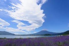 Mt. Fuji and Lavender at Lakeside of Kawaguchi Stock Photography