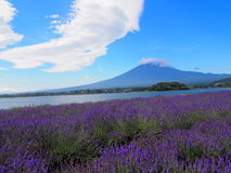 Mt. Fuji and Lavender at Lakeside of Kawaguchi Royalty Free Stock Photos